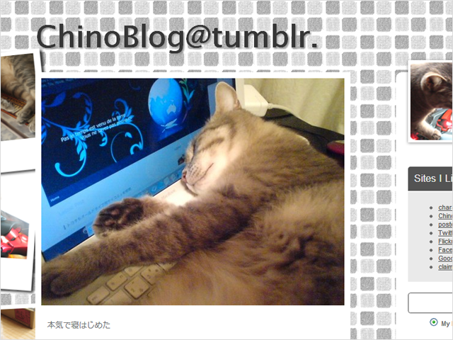ネコ好きさんにはTumblrがオススメ