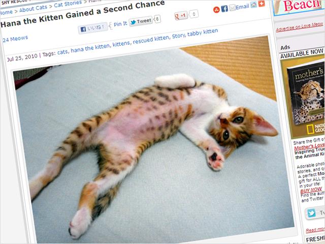 全米が萌えた!?『Love Meow』がはなの事を書いてくれました